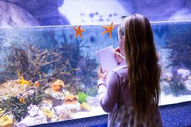 picture of starfish  - young woman drawing starfish in a tank at the aquarium - JPG