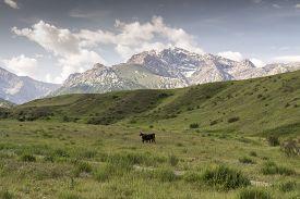 foto of shiva  - Mountain Valley Shiva,  Kyrgyzstan, Batken Province,  a picturesque valley where  pastoralists live - JPG
