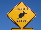 Bandicoot Sign