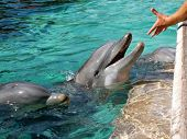 Dolphins and hand