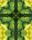 foto of prickly pears  - kaleidoscope cross from photo of prickly pear cactus blossoms - JPG
