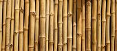 Постер, плакат: Bamboo Wall pattern Bamboo is used around the world by humans for Housing Furniture Fences Boats