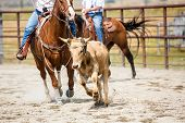 Team Roping Heading And Heeling Rope A Steer At A Rodeo poster