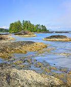 stock photo of pacific rim  - Rocky ocean shore in Pacific Rim National park Canada - JPG
