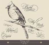 hand-drawn bird with elegance calligraphy design 3
