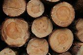 Lumbers In Crosscut
