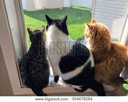 poster of Three Cats Sitting Together On A Window Sill Looking Out The Window Into The Backyard.one Cat Is Gre