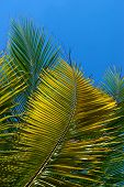 Green Palm Tree Leaves In Front Of Blue Sky