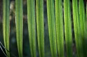 Close Up Of Transparent Palm Tree Leaf