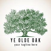 Tree Logo - Vintage Style Illustration Of An Oak Tree poster