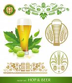 image of hop-plant  - Vector set  - JPG