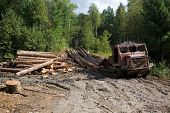 Deforestation. Forestry. Old skidder transports sawed trunks of coniferous trees in the place of pro