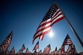 Large group of American Flags commemorating a national holiday, veterans day, independence day, 9/11