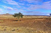 Amboseli Natural Park, Kenya
