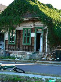 image of katrina  - Overgrown house in New Orleans LA USA after Hurricane Katrina - JPG