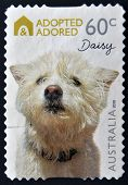 A stamp printed in Australia shows Adopted and adored campaign Daisy a dog breed westies