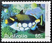 A stamp printed in Australia shows an image of clown triggerfish coral faith inventive