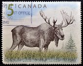 CANADA - CIRCA 1997: A stamp printed in Canada shows a Moose orignal circa 1997