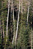 Kaibab National Forest, Arizona, Usa..