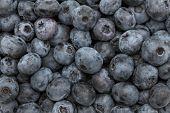 Ripe Blueberry. Background