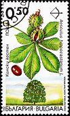 Postage stamp Bulgaria 1992 Horse Chestnut, Aesculus Hippocastan