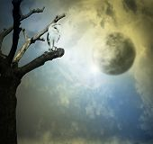 picture of nocturnal animal  - Beautiful artistic background representing a barn owl on a tree with beautiful sky with planets on the background - JPG