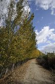picture of vaquero  - Poplar Forest in Fuente Vaqueros - JPG