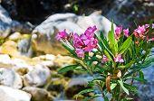 Flora at Samaria gorge