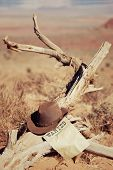 Hat On Dead Wood