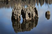 Cypress Tree Stump - Chipola River