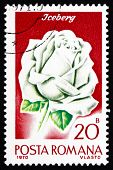 Postage stamp Romania 1970 Iceberg Rose, Rose Cultivar