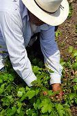 Trabalhadores de fazenda mexicana