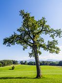Tree In Typical Bavarian Landscape