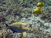 Reefbed