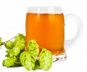 Glass Of Beer With Foam And Branch Of Hop