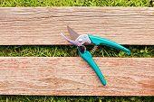 Pruner On Wood Board