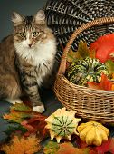 cute cat and colorful pumpkins