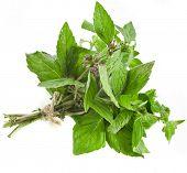 Oregano or Marjoram Herb (origanum majorana ) sheaf isolated on white background