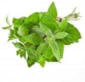 Fresh Oregano or Marjoram Herb close up macro (origanum majorana ) isolated on white