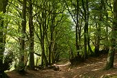 Wooded area Quantock Hills Somerset England