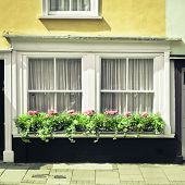 pic of english cottage garden  - Selection of plants on a cottage window ledge - JPG
