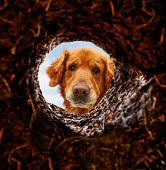 stock photo of mutts  - a dog peeking into a dirt hole in the ground - JPG