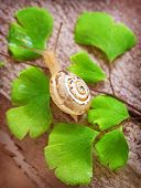 Little snail crawling on fresh green leaves, nature of the forest, slimy insect, spring time, small animal with slow speed, wild life concept