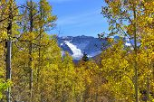Yellow, Green And Red Aspens And Colorful Mountains Of Colorado During Foliage Season