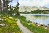 Trail In Medicine Bow Mountains Of Wyoming