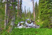 Mountain Stream In The Wilderness Of Colorado During Summer