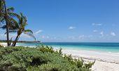 Idyllic beach with coconut trees at Mexico
