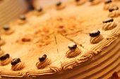 Tasty Cream Cake
