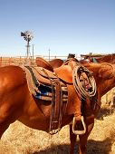 Ranch Horse And Saddle