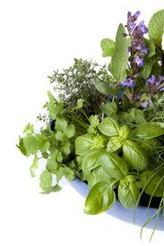 foto of flower pot  - Herb garden in a blue bowl isolated on white - JPG